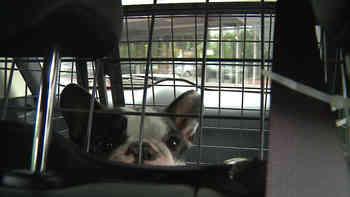 Warum es für Hunde schon jetzt bei 15 Grad gefährlich ist im parkierten Auto.