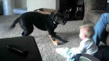 Hund oder Baby? Sehr schwer zu sagen, wer hier hysterischer reagiert