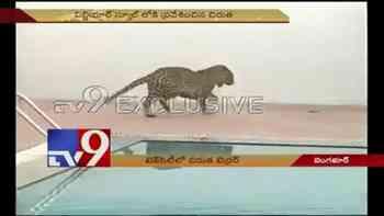 14 Stunden Jagd, 6 Verletzte: Leopard sorgt für Chaos an indischer Schule
