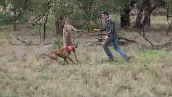 Känguru nimmt Hund in den Schwitzkasten – das lässt der Besitzer nicht gelten